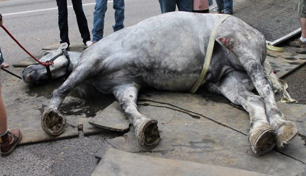 SLC Leaders Stunned As Pioneer Horse Becomes Victim of Animal Activists