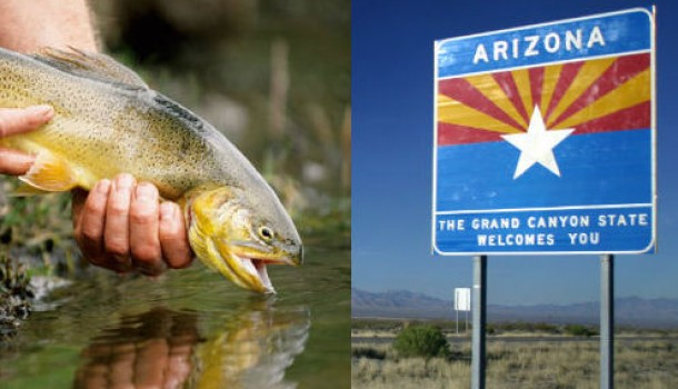 Arizona Gov. Seeks to Change State Fish to 'Something Less Symbolically Tolerant'