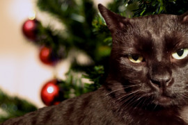 Local Cat Disgusted by Holiday Consumerism